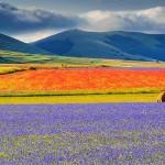 castelluccio-fioritura2